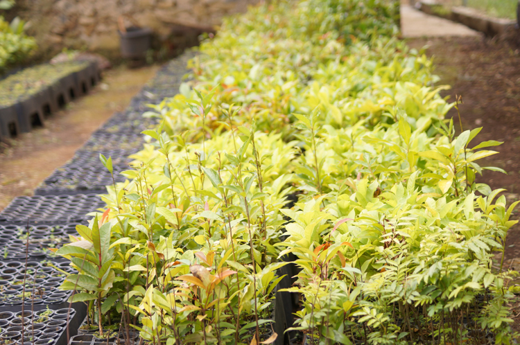 Bibit tanaman Taman Buru Gunung Masigit Kareumbi / Destinasi Bandung