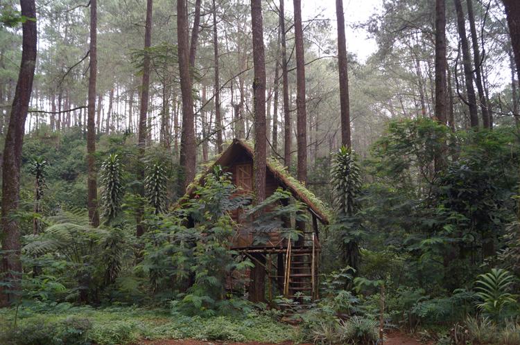 Rumah pohon Taman Buru Gunung Masigit Kareumbi / Destinasi Bandung
