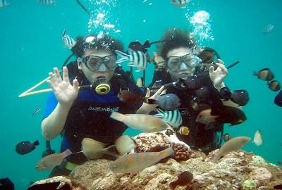 Scuba diving / wisatania.com