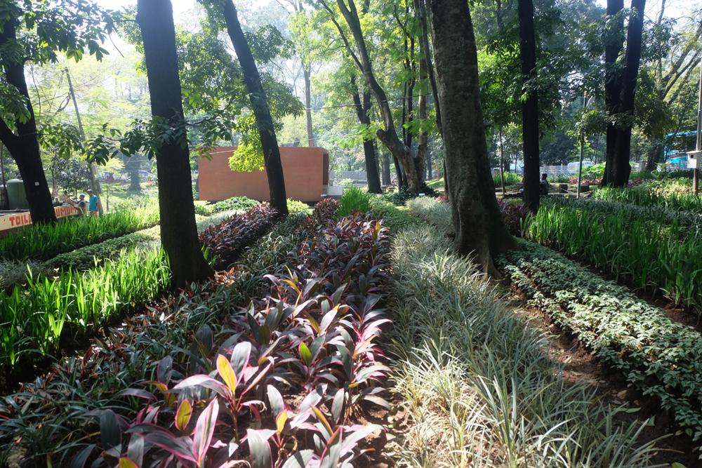 Taman bunga kandaga puspa cilaki / Destinasi Bandung