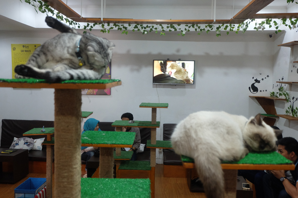 cafe kucing bandung