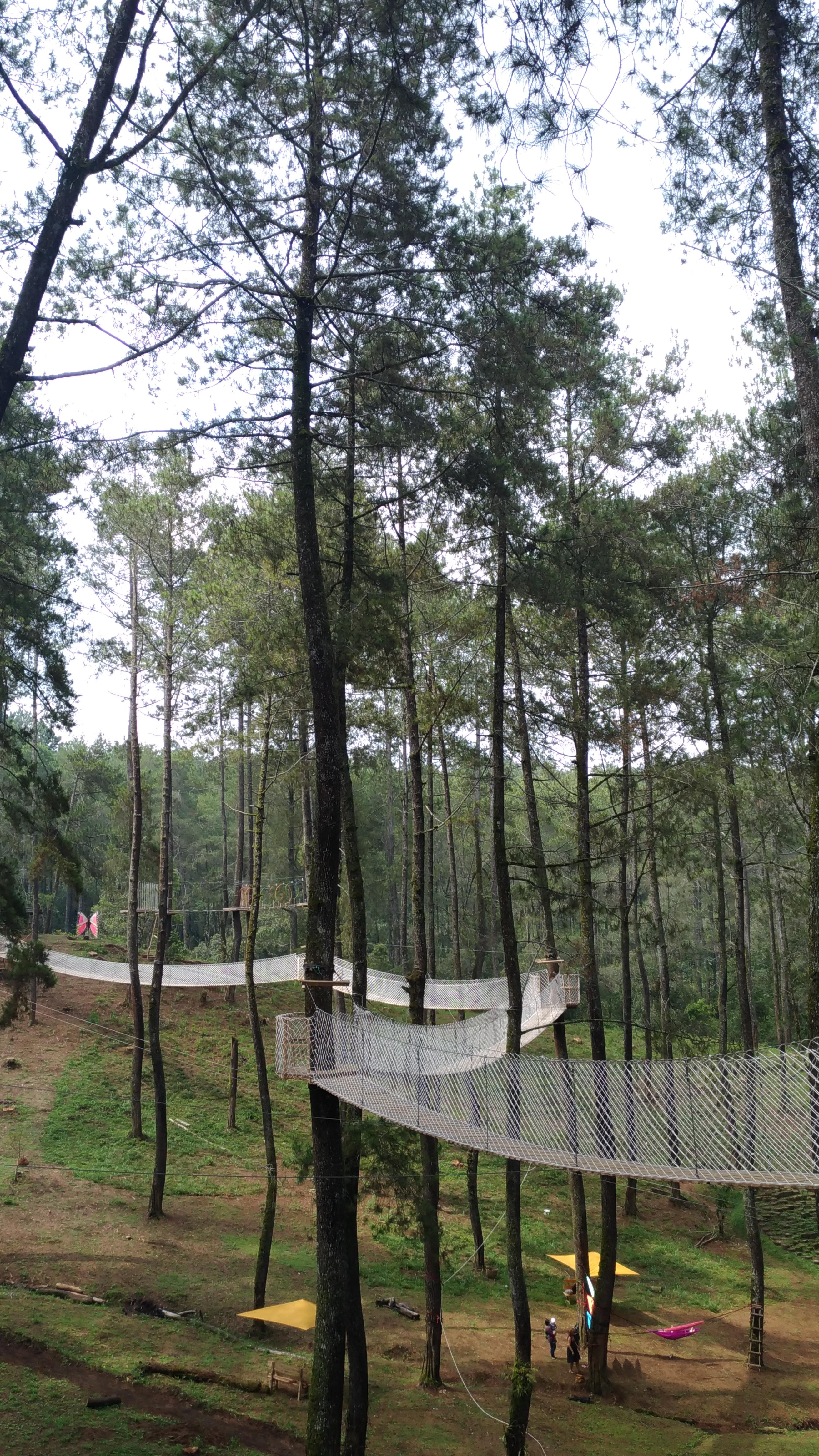 Berikut Harga Tiket Masuk Ke Orchid Forest Cikole Lembang