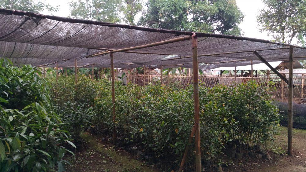 Eduwisata Waaida Farm Petik Sendiri Buah-buahan Langsung